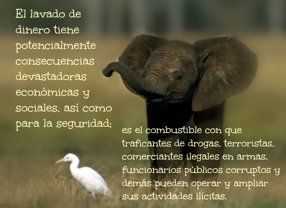 Elefantito y garza